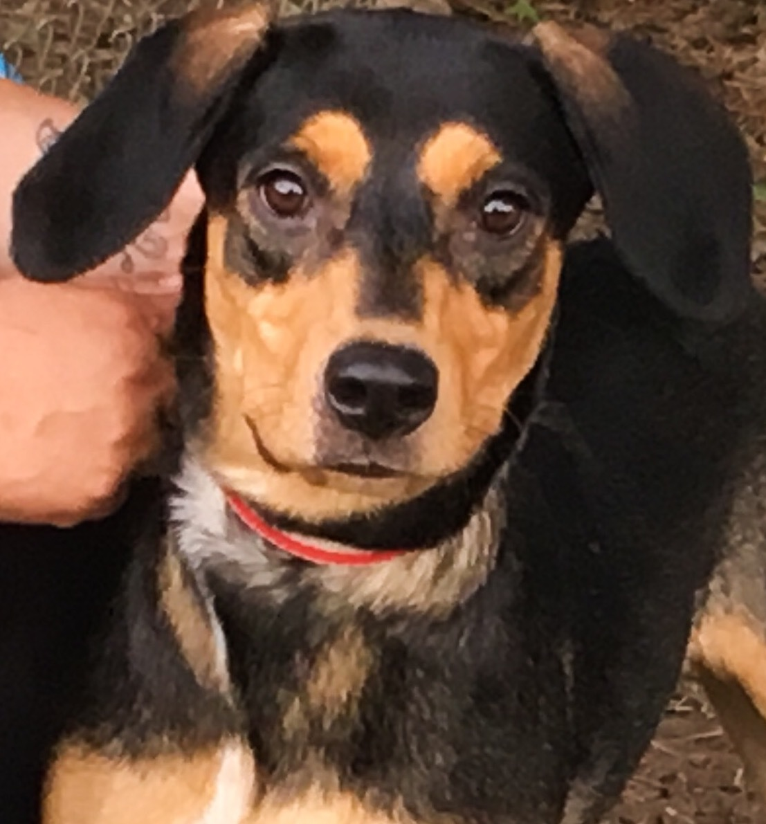 Kayla, 1 year old Female, Hound mix